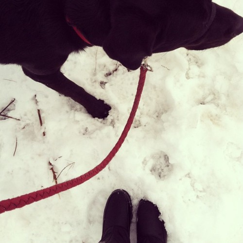 a walk in the snow #fromwhereistand