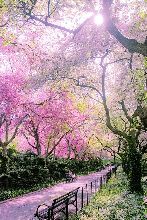 all-that-good-stuff13:  Spring in Conservatory Garden - Central Park, NY