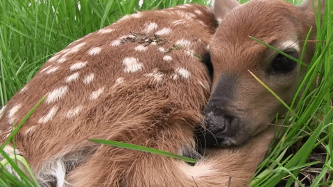 the cat and the fawn by marksvargo on yt fawn nature peaceful gentle animals