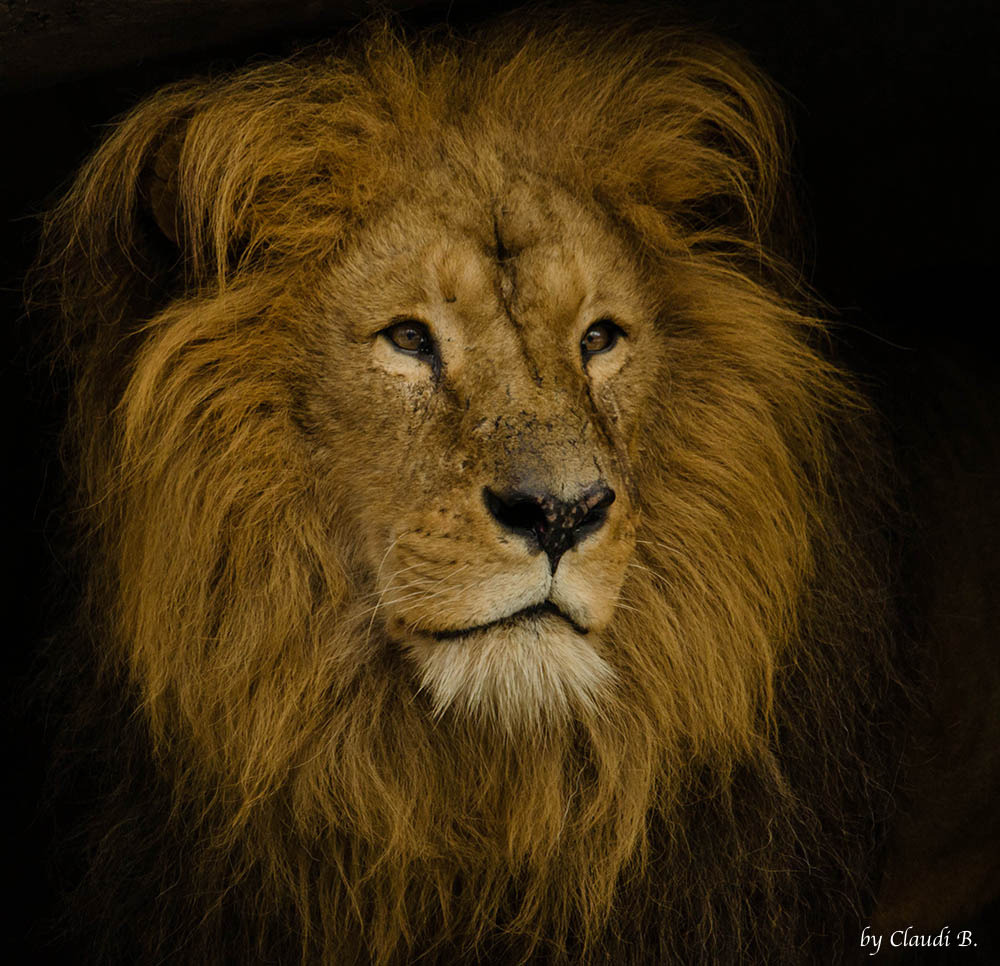 llbwwb:   Lion Burgers Zoo (by ClaudiB.)