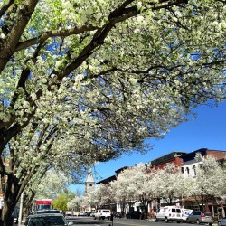 #greatbarrington #inbloom #mainstreet #doomedbloom