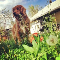 Now that's what I call spring vol 4 #dog #spring #denver