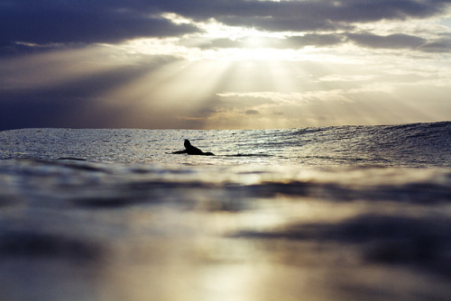 monstersurfburguerandstyle:  Solo Rays by Gary Parker Photography on Flickr.