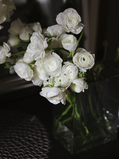 brjudge:  Always something so lovely about simple white flowers. Wouldn't you agree?