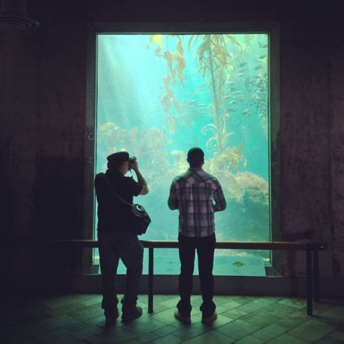 Monterey Bay Aquarium | #portraitsofstrangers #monterey #aquarium #adventure #window #tank #fish #sealife #iphoneography #igerssf  (at Monterey Bay Aquarium)