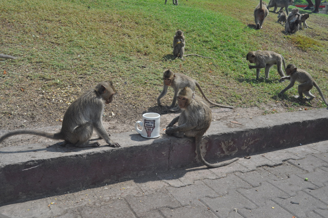 Feeding the monkeys in Lopburi, Thailand.