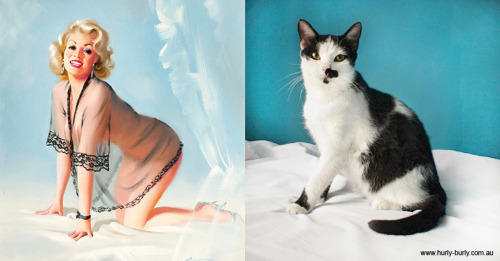 cats that look like hitler that look like pinup girls