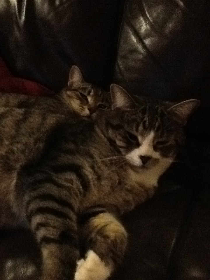 My kitties are soo cute!!!!!!