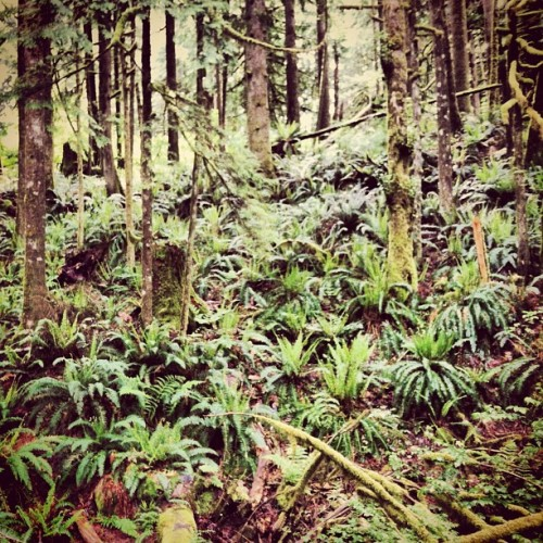 Fern Gully. #woods #NW #whocares (at Wallace Falls Trail)