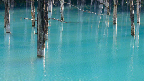 """Powder Blue Pond"" - Kent ShiraishiBiei in Hokkaido,Japan.This pond is a beautiful pond which changes colors every day. It is sometimes visible to wonderful blue or green."