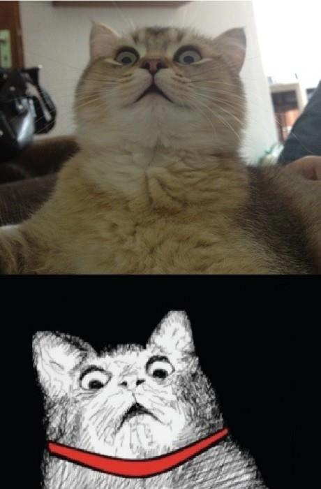 misteriousrose:  Meme cat