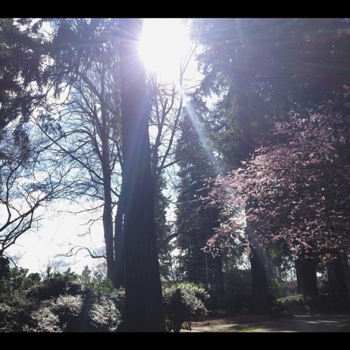everyone and their mom's dog is outside today.  (at Laurelhurst Park)