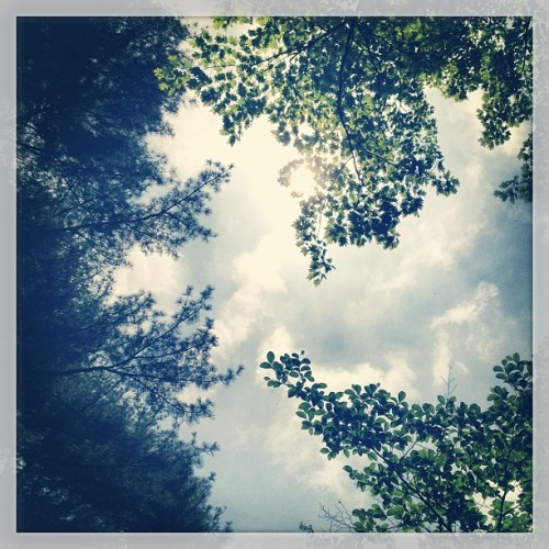 #lookup (at Clark Botanic Garden)