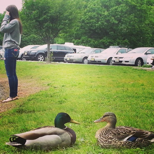 Quack quack #myupload #girl #grass #duck #couple #green