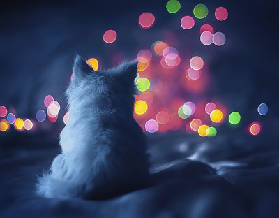 "glowstick-rave:  500px / Photo ""waiting for the night to fall"" by Beauty on We Heart It - http://weheartit.com/entry/46884503/via/sarahmikayla"