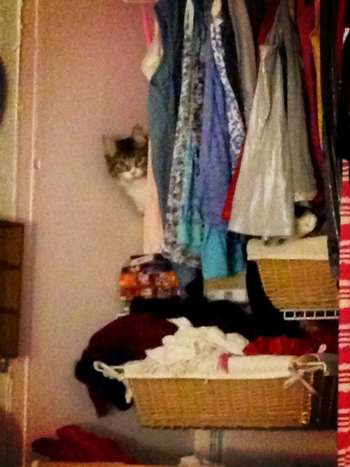 get out of my closet cat. i don't think you'd like it if I tried to wear you to school tomorrow.
