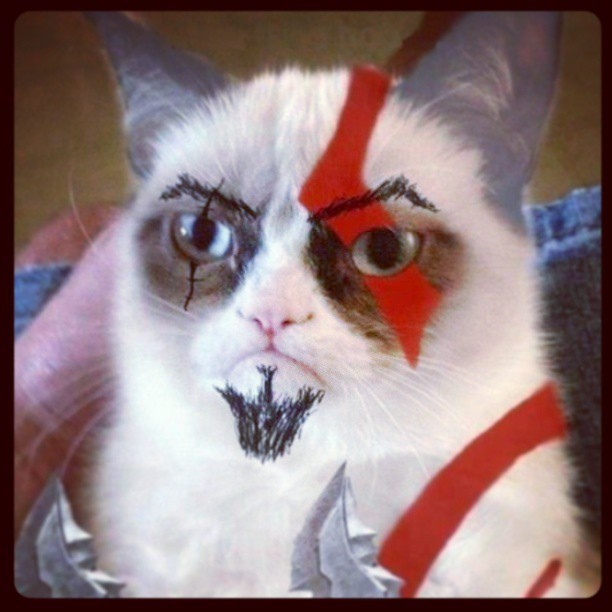 Cat of war.#godofwar #cat