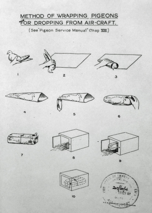 criminalwisdom:  Via brucesterling  Pigeon diy