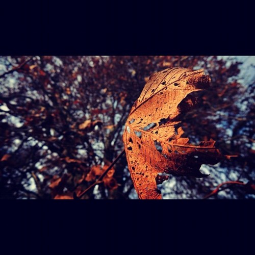 #tree #leaf #decay #death #fall #winter #sky #close #closeup #orange #yellow #blue #instafeel #instagood #utah #park #nature #outdoors