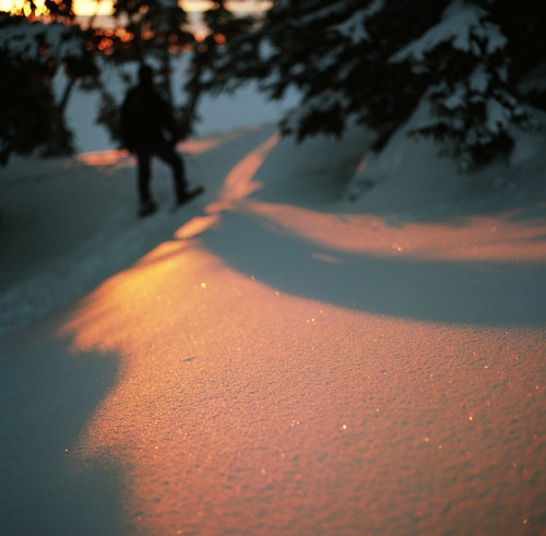 the sparkling snow by manyfires on Flickr.
