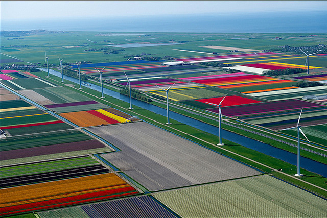 Tulip fields in Holland form a rainbow quilt of color By Aaron Souppouris, theverge.com If there's one thing the Nether­lands is famous for, it's tulips. Pho­tog­ra­ph­er Nor­mann Szkop has doc­u­ment­ed the col­or­ful fields of Anna Paulow­na, a town at the north­ern tip of the coun­try's North Hol­land region. To cap­ture the 100-p…   Tulip fields in Holland form a rainbow quilt of color http://flip.it/tTAhy
