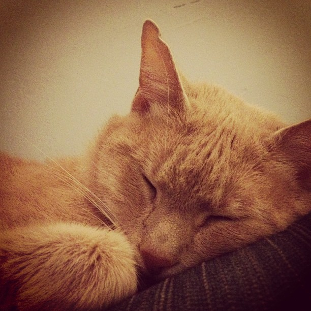 rpb138:  He's a little angel (when he sleeps) #cat #cats #catsofinstagram #kitty #kitteh #cute #pet #pets