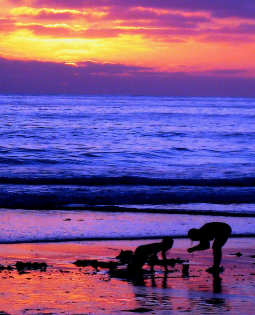magicalnaturetour:  Looking for Beach Treasure, Pastel Heaven in San Diego by moonjazz on Flickr.