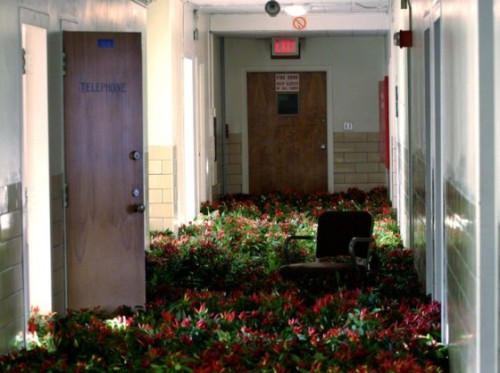 Flowers in an abandoned mental asylum.