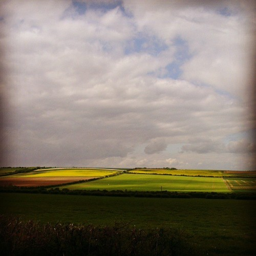Patchwork. (The big grey rain  clouds were above and behind me)  (at Ickleton)