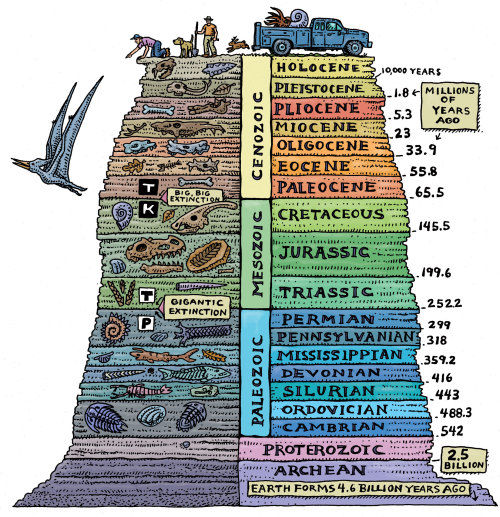 "mucholderthen:   THE ULTIMATE CHRONOSTRATIGRAPHIC CHART Ray Troll is a world-renowned Alaska-based artist, specializing in fish and paleontology art.  This is from his Pancakes and Geology: Cruisin' the Fossil Freeway.  ""… I drew this image for the Cruisin' the Fossil Freeway book and exhibit I did with Dr. Kirk Johnson. … I truly believe that everyone should know the geologic ages of our planet. They should be taught in kindergarten right alongside the ABCs as far as I'm concerned. I'm dead serious about this folks. And hey… they're surprisingly easy to memorize and having this t-shirt in your wardrobe will make it even easier…"" Website:  Troll Art"