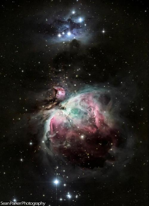 "the-science-llama:  Astrophotography by Sean Parker— Orion Nebula  Total exposure time was around 12 minutes taken with the Canon 5DMKII through a TEC 140mm (1,000mm equivalent) f/7 APO ED Refractor Telescope. Stacked and processed in Photoshop CS6  Facebook // 500px Also, awesome science fact included —> We are literally right next to the Orion Nebula, and by ""right next to"" I mean ~1300 light years. But that is still pretty close considering the size of our galaxy."