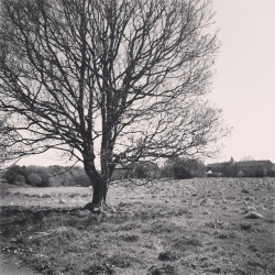 #latergram #scenic #tree #landscape #bnw (at Scotstown Moor)