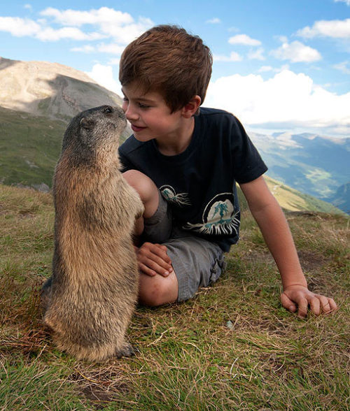 creepicrawlies:  8-YEAR-OLD HAS AMAZING FRIENDSHIP WITH ALPINE MARMOTS Caters News