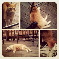 Getting friendly at Black Dog…Orange Cat? #blackdogcafe #lakella #tallahassee #local #lazywednesday #cat #catsofinstagram #cafe #curiosity