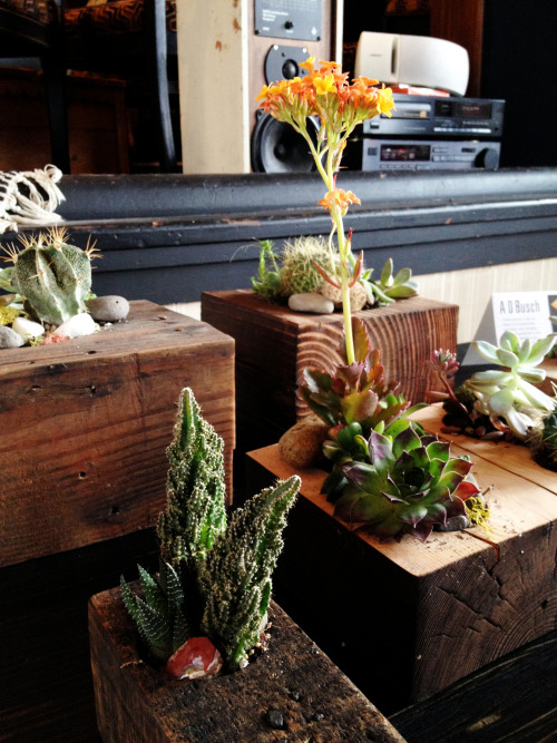 Vendor Spotlight: A.D. Busch We are proud to host the creations of Portland husband and wife team Aaron D. Busch and Rachel Busch. Their dynamic designs utilize up-cycled and recycled materials. Reclaimed wood and metal are reformed into striking modern furnishings that reflect VDC's appreciation for quality and craftsmanship. More on the Busch's work can be found on their website.