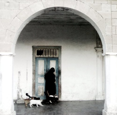 womenandcats:  Ali Emrah, 'the nun with her cats'