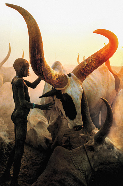 Dinka Boy with Long Horned Bull, South Sudan 2006 by Carol Beckwith & Angela Fisher (The Dinka series) See a large, slightly differently cropped, version of this photo here