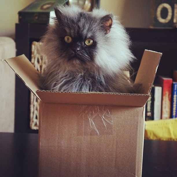 """Okay. I'm in a box. What's so funny about that?"" Photo by ©colonel meow"