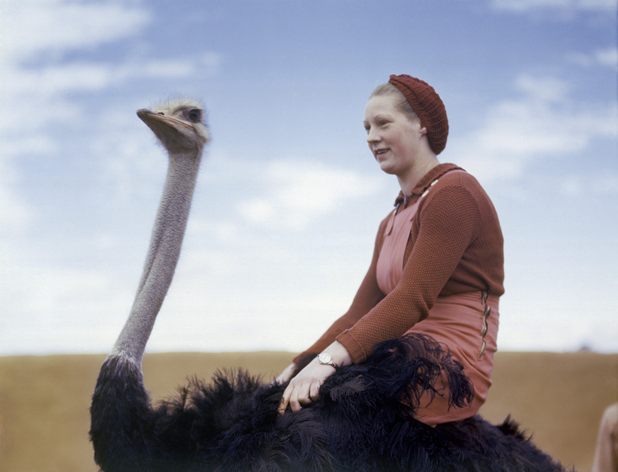 natgeofound:  A portrait of a woman riding an ostrich in South Africa, August 1942.Photograph by W. Robert Moore, National Geographic