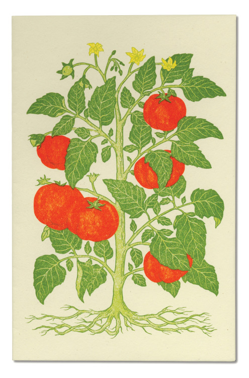 papress:  Linocut menu cover by Patricia Curtan. From Menus for Chez Panisse: The Art and Letterpress of Patricia Curtan available from PAPress here.