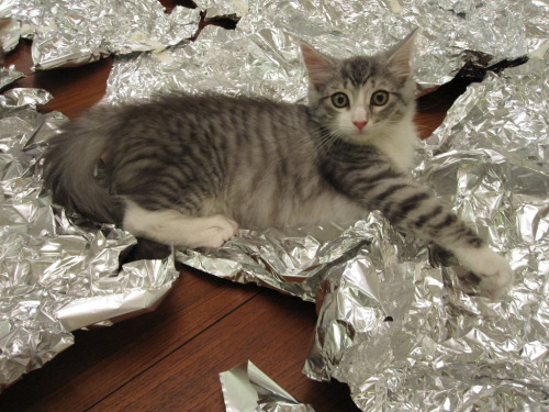 "catsbeaversandducks:  ""OMG is it mithril? Are you sure? Not silver or steel, but REAL mithril??"" Photo by ©jadepearli"