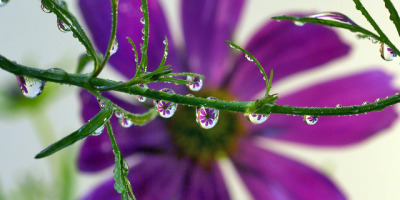 purple petal panorama (macro landscape 3) by Steve took it on Flickr.I've always liked what this guy does with drops, what a great vision!f