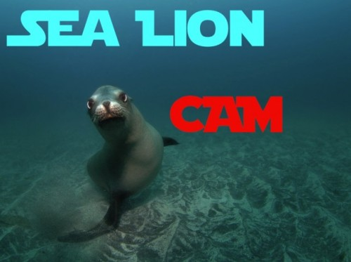SEA LIONS LIVE FROM 10AM EST 'TIL 5PM EST!by HelloGiggles Team http://bit.ly/W86jR0
