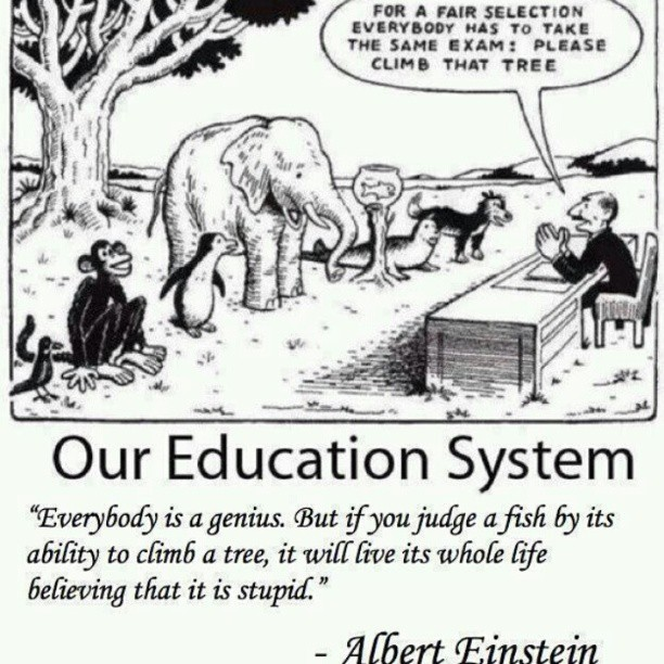 huckberriray:  #Einstein #animals #education #quote