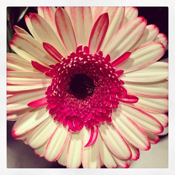 The heart of a happy flower. #chicago #floral #suzannecummingsflowers  (at SUZANNE CUMMINGS flowers HQ)