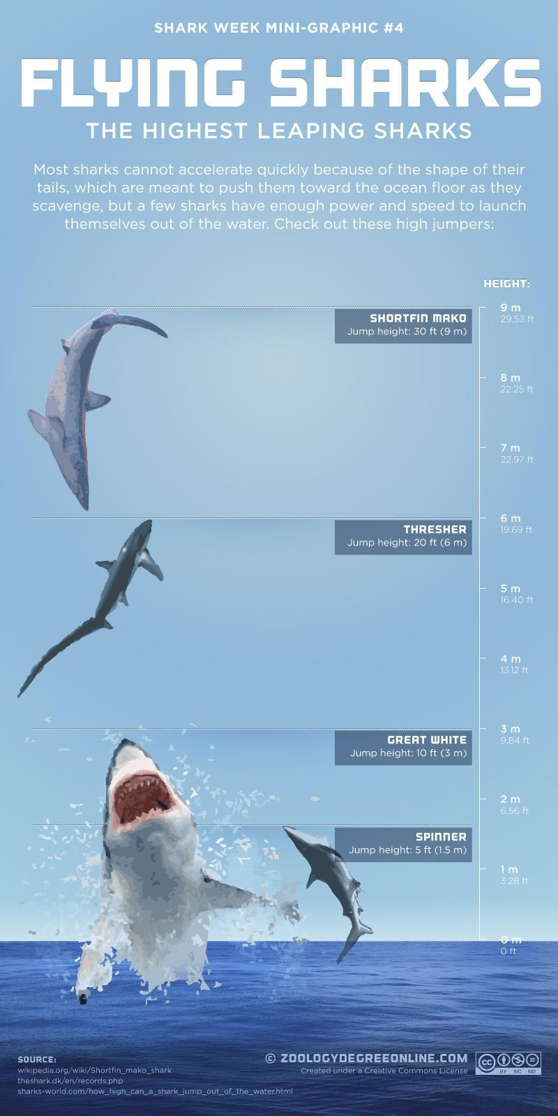 mad-as-a-marine-biologist:  Highest leaping sharks
