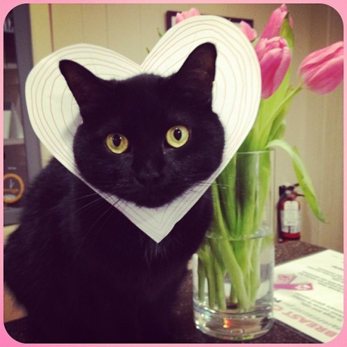 My valentine #cat #love