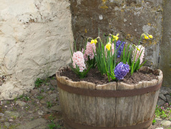 Lygan-y-Wern: The Hall: barrel planting outside cottage door by green voyage on Flickr.