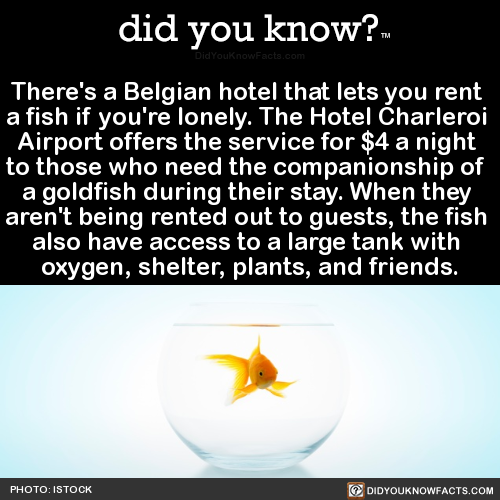 theres-a-belgian-hotel-that-lets-you-rent-a-fish