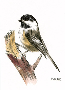 darrencalvert:  A little pen and ink/watercolor drawing of a chickadee I drew as a Mother's Day gift for my grandmother.